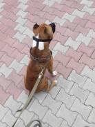 Выгул собак. (др животных)