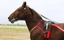 Фотосессии с лошадьми в Арсеньеве