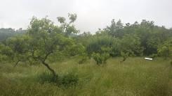 Продам 7 сот. в Дагомысе на Сергей поле, ровный, вид, коммуникации. 700 кв.м., собственность, электричество, вода, от агентства недвижимости (посредн...