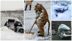 Погрузка и вывоз снега; мусора