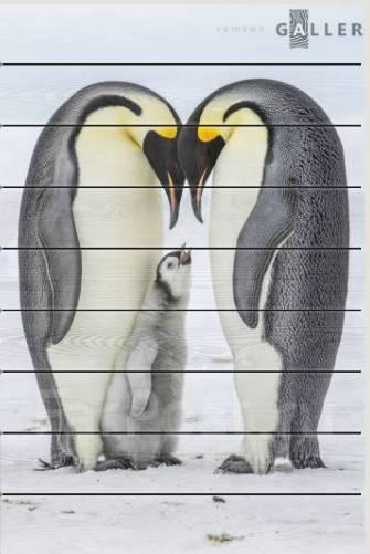 315c0797a225e Веселый пингвин товары для интерьера во Владивостоке