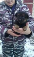Прекрасный щенок в добрые руки