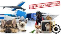 Доставка, перевозка животных, зоотакси