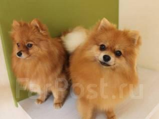 """""""ЭкоПетс""""- студия красоты для животных! Стрижка Собак и Кошек!"""