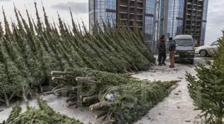 Продавец елок вакансии москва
