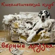 """Кинологический клуб """"верные друзья """""""