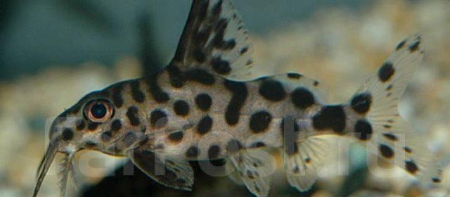 Рыбки аквариумные хабаровск