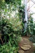 16 декабря! Ботанический сад ДВО РАН - знойное лето среди зимы!