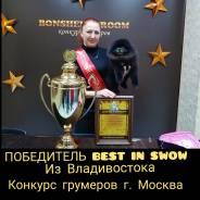 Стрижка Шпицев ! Зоосалон Стиляги! Победитель конкурса грумеров!