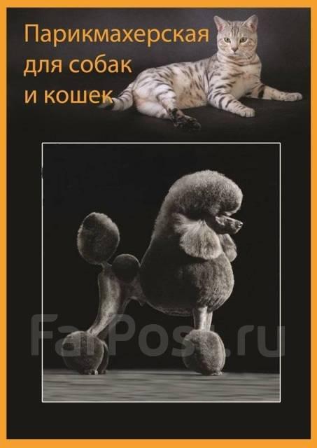 """Зоосалон """" Чемпион """" ( Профессиональная стрижка для собак и кошек )"""
