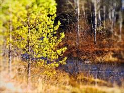 Купить 5 гектаров земли в Горном Алтае (Чемал) за 2,5 млн. руб. 50 000кв.м., собственность, электричество, вода