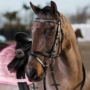 Ремонт, восстановление спортинвентаря, конной амуниции.