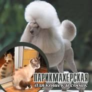 """Стрижка кошек и собак """"Кошачье Царство"""""""