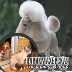 """Стрижка кошек и собак """"Кошачье Царство"""" Акция Каждая 5 Стрижка Бесплат"""