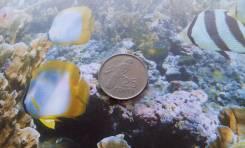 Экзотика! Сейшелы. 25 центов 1992 года. Сейшельский чёрный попугай.