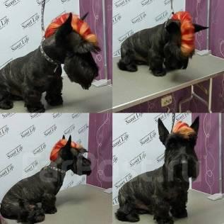 Креативное окрашивание шерсти для собак любых пород.