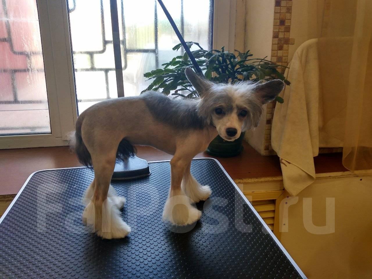 Барахолка объявление дать продам собаки владивосток куплю холодильник в харькове объявления