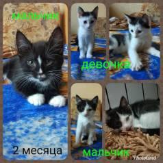 Котята чёрно-белые