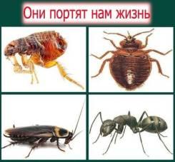 Уничтожение насекомых клопов тараканов