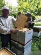 Соты пчелиные.
