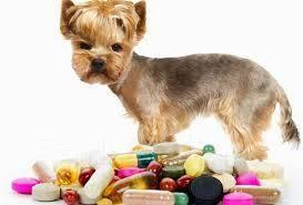 Ветеринарная Клиника! Доступные цены! Акции!