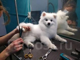 Стрижка собак и кошек, кинологический центр DogPride