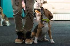 Дрессировка собак, кинологический центр DogPride