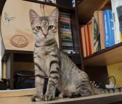 Молодая беспородная кошечка (6 мес) котя ищет любящих хозяев.