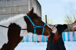 Верховая езда, катание на лошади, фотосессии!