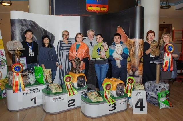 21 и 22 апреля Международная выставка кошек WCF. Продажа котят.