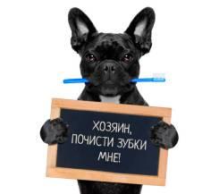 Акция! Ультразвуковая чистка зубов для животных