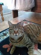 Кошка шести лет в добрые руки