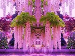 Япония. Токио. Экскурсионный тур. Парад цветов в Японии
