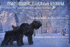 Русский черный терьер.