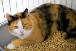 Застенчивая кошечка Тортилла мечтает о домашнем уюте