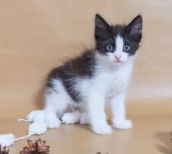 Маленький котик — розовый носик. Котенок 3 мес. в дар.