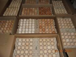 Плановые поставки инкубационного яйца. Под заказ