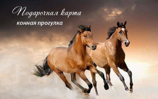Акция. Легкая конная прогулка для начинающих 450р. Акция длится до 31 июля