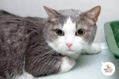 Независимый и в меру упитанный кот Бармалей