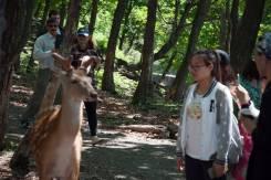 Экскурсия для школьников Сафари парк