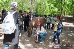 Школьная экскурсия в Сафари парк