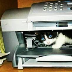 Картриджы от принтеров (Любые)