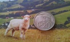 Новая Зеландия. 20 центов 1982 г. Киви. Большая красивая монета!