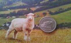 Новая Зеландия. Нечастые 6 пенсов 1965 года! Лямка на плече. Птица гуй