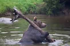 Услуги грузчиков круглосуточно Русский медведь