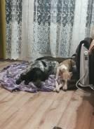 Передержка собак, кинолог/вет. врач