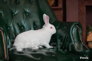 Кролик.