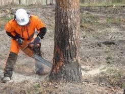 Спил деревьев! Разработка земельных участков!