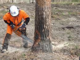 Спил деревьев! Разработка земельных участков! Строительство домов!