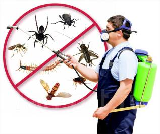 Уничтожение тараканов, клопов, блох в квартирах Товарищей !